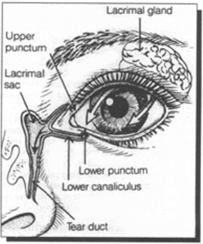 production of tears, showing lacrimal gland, upper punctum, lower punctum, lacrimal sac, lower canaliculus, and tear duct.